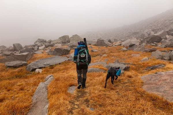 best backpack for dogs